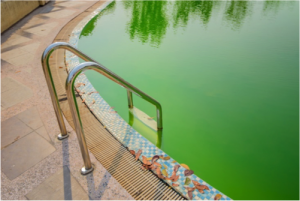 Algae Swimming Pool