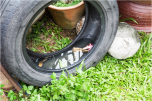 A discarded tire containing standing water can become a choice breeding ground for mosquitoes.
